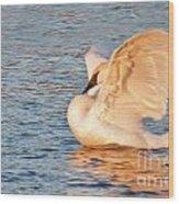 Swan In Golden Light Wood Print