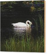 Swan In September Wood Print