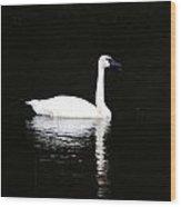 Swan In Wispy Grass Wood Print