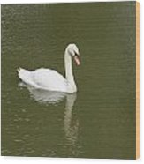 Swan Looking At Reflection Wood Print