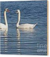 Swan Mates Wood Print by Sabrina L Ryan