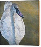 Swan On Evergreen Lake Wood Print
