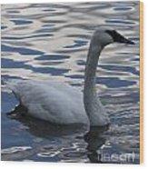 Swan Watching Wood Print