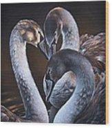 Swan Whispers Wood Print
