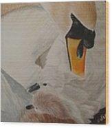 Swan With Cygnets Wood Print