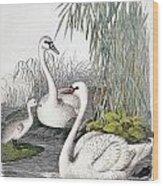 Swans, C1850 Wood Print by Granger