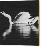 Swans Feeding And Drinking Wood Print