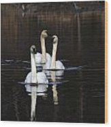 Swans In A Row Wood Print