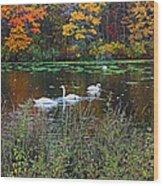 Swans In The Lake Wood Print