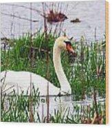Swan's Marsh Wood Print