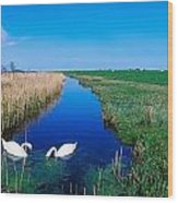 Swans On Bog, Near Newcastle, Co Wood Print