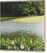 Swans On Pond And Hibiscus With Oil Painting Effect Wood Print