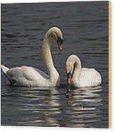 Swans Swimming Wood Print