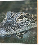 Sweet Baby Alligator Wood Print
