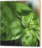Sweet Basil From The Garden Wood Print