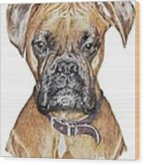 Sweet Boxer Wood Print by Marla Saville