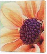 Sweet Dahlia Wood Print
