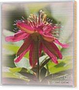 Sweet Dreams Passion Flower Wood Print
