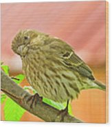 Sweet Finch Painted Effect Wood Print