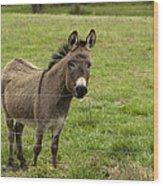 Sweet Little Donkey Wood Print
