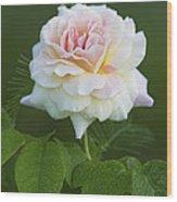 Sweet Morning Peace Rose Wood Print