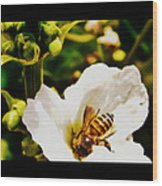 Sweet Nectar Shot Wood Print