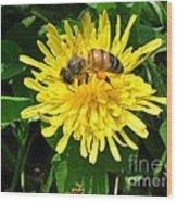 Sweet Nectar Wood Print by The Kepharts
