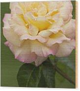 Sweet Peace Rose Wood Print