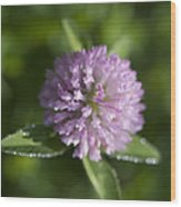 Sweet Pink Clover Wood Print