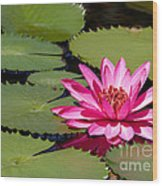 Sweet Pink Water Lily In The River Wood Print