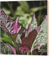 Sweet Potato Vine Wood Print