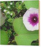 Sweet Potatoe Flower Wood Print by Juliana  Blessington