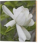 Sweet Sweet Gardenia Wood Print
