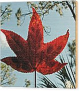 Sweetgum Wood Print