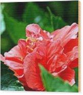 Sweetheart Red Wood Print