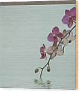 Swimming Orchids Wood Print