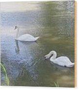 Swimming Swans Wood Print