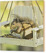 Swingin Squirrel Robber Wood Print