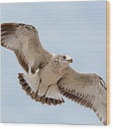 Swooping In For A Meal Wood Print