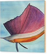 Swordfish Watercolor Of National Georgraphic Photo Wood Print
