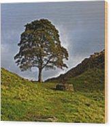 Sycamore Gap Wood Print