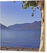 sycamore tree at the Lake Maggiore Wood Print