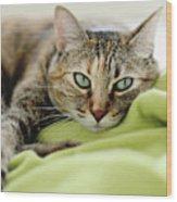 Tabby Cat On Green Blanket Wood Print