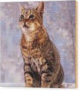 Tabby Cat Portrait Of A Cat Wood Print