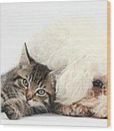 Tabby Kitten And Bichon Fris� Wood Print