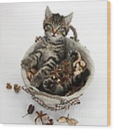 Tabby Kitten In Potpourri Basket Wood Print