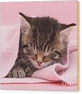 Tabby Kitten Wood Print