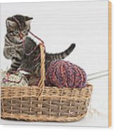 Tabby Kitten Playing With Knitting Wool Wood Print