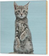 Tabby Kitten Sitting Up Wood Print