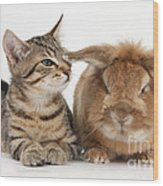 Tabby Kitten With Rabbit Wood Print